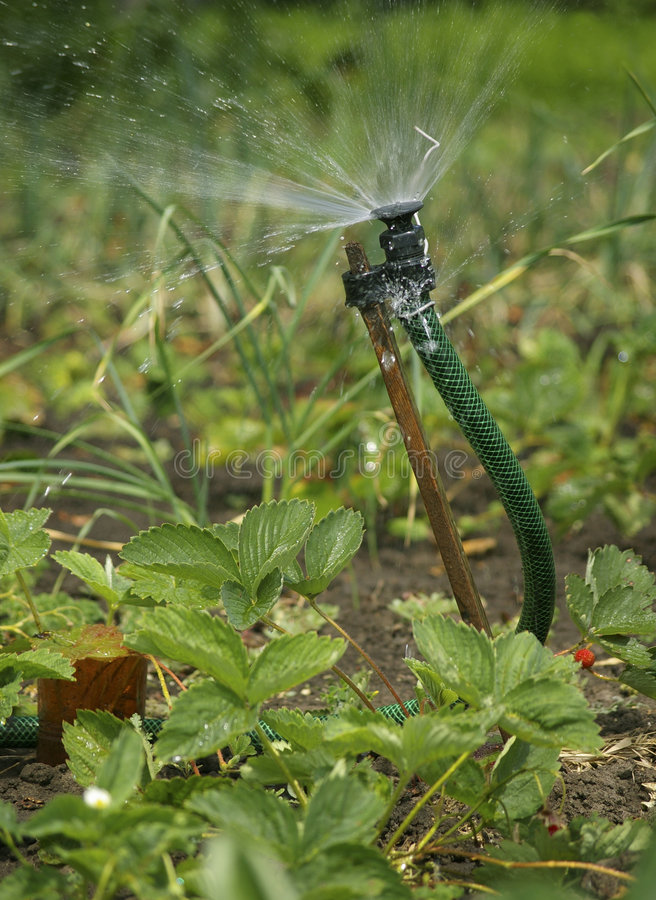 Irrigation sprinkler watering garden royalty free stock photography