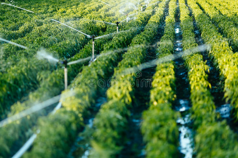 Irrigation system in function stock image