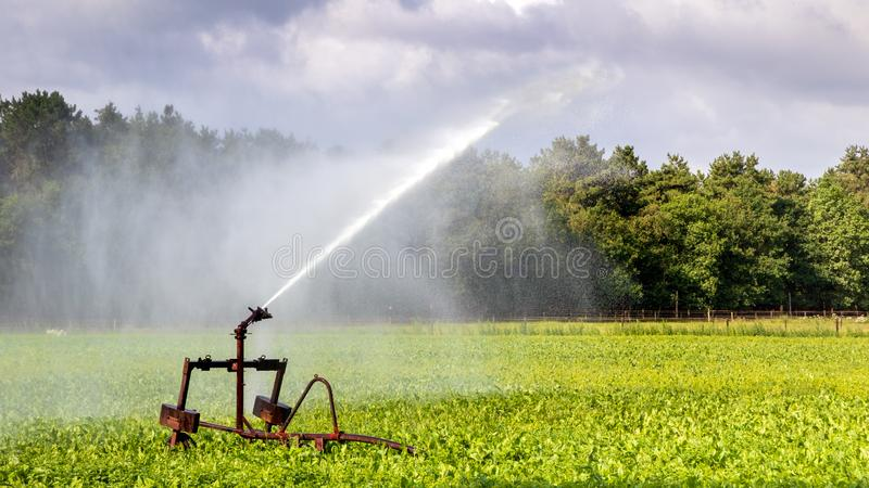 Irrigation system watering farm crops stock images