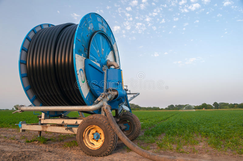 Irrigation system watering agricultural field of carrots and parsley stock image
