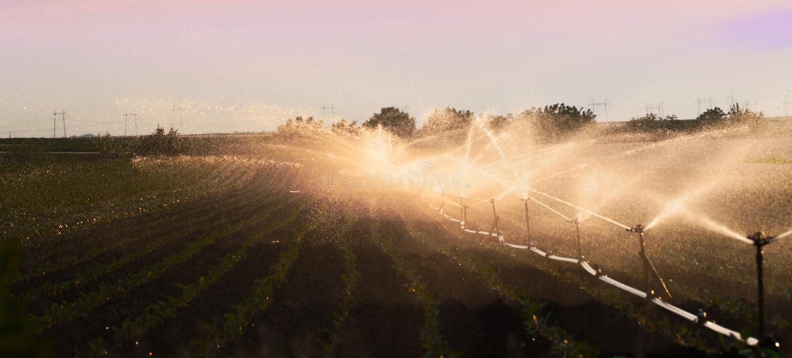 Irrigation system watering a crop of soy beans royalty free stock image