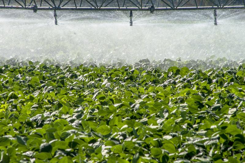 Irrigation system watering a farm field of soy,. In Brazil royalty free stock image