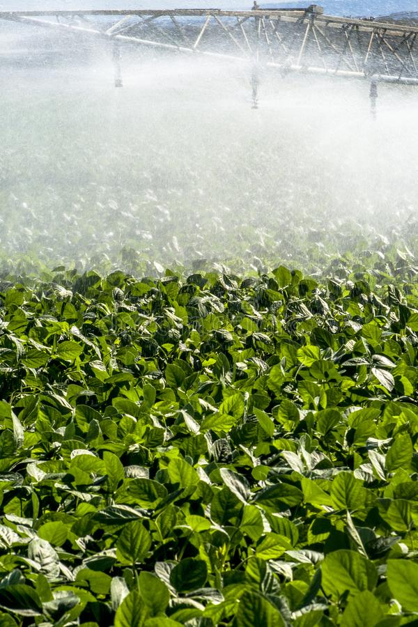 Irrigation system watering a farm field of soy. In Brazil stock photography