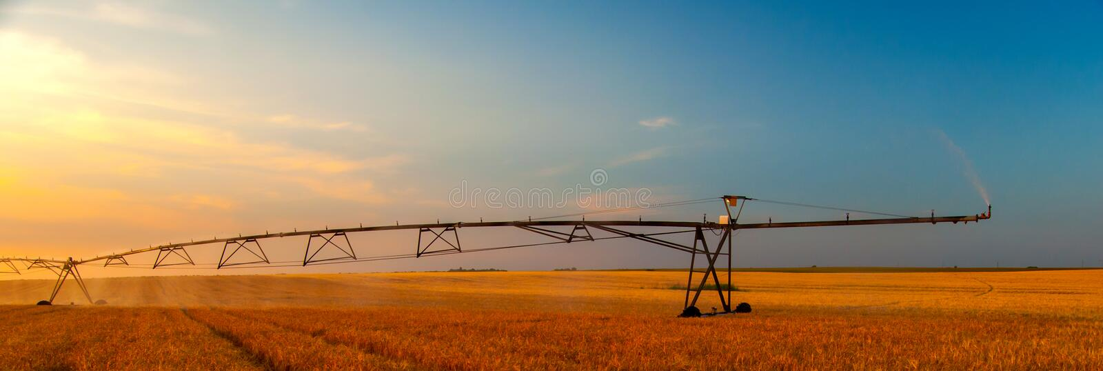 Irrigation system watering wheat field at summer sunset.  royalty free stock photos