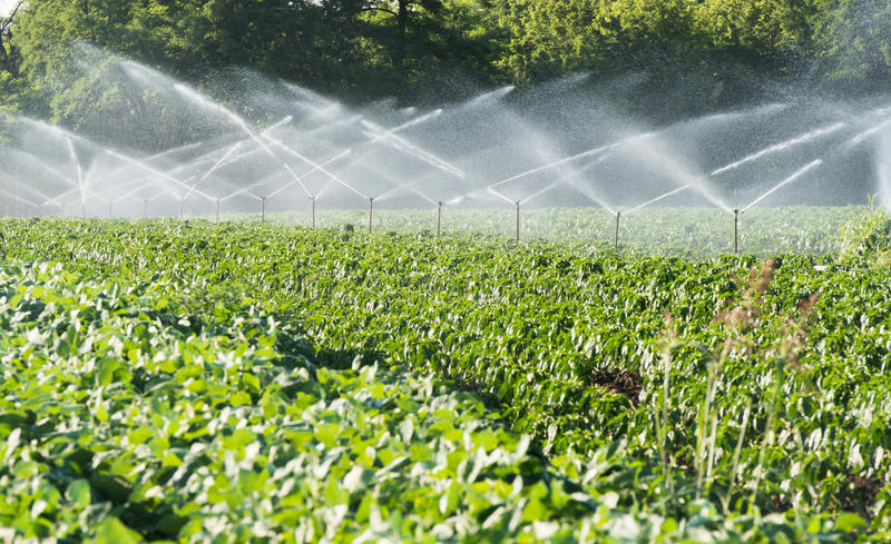 Download Irrigation of vegetables stock image. Image of growing - 32141559