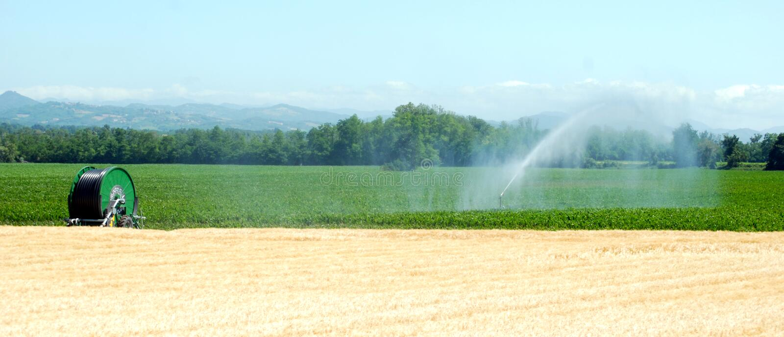 Irrigation on a wheat field royalty free stock photos