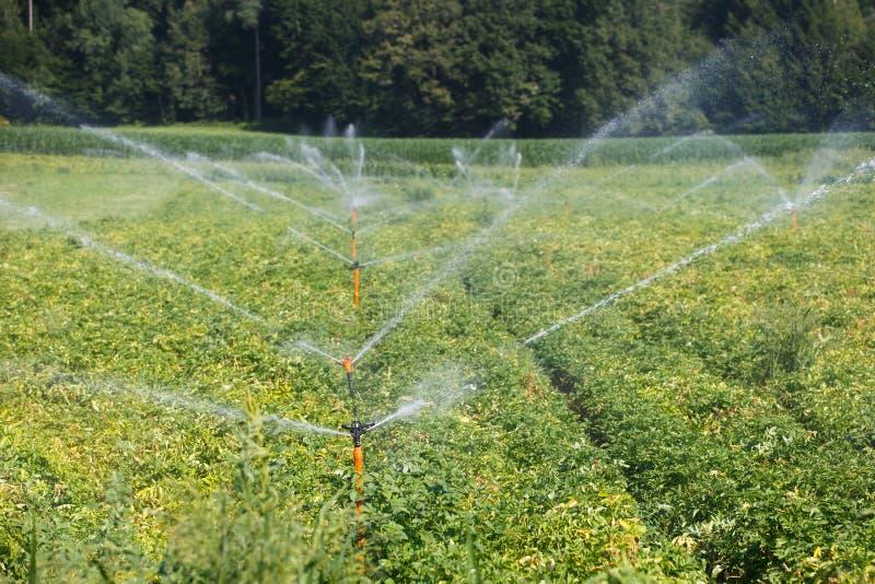 Irrigational system on extensive potato field stock photography