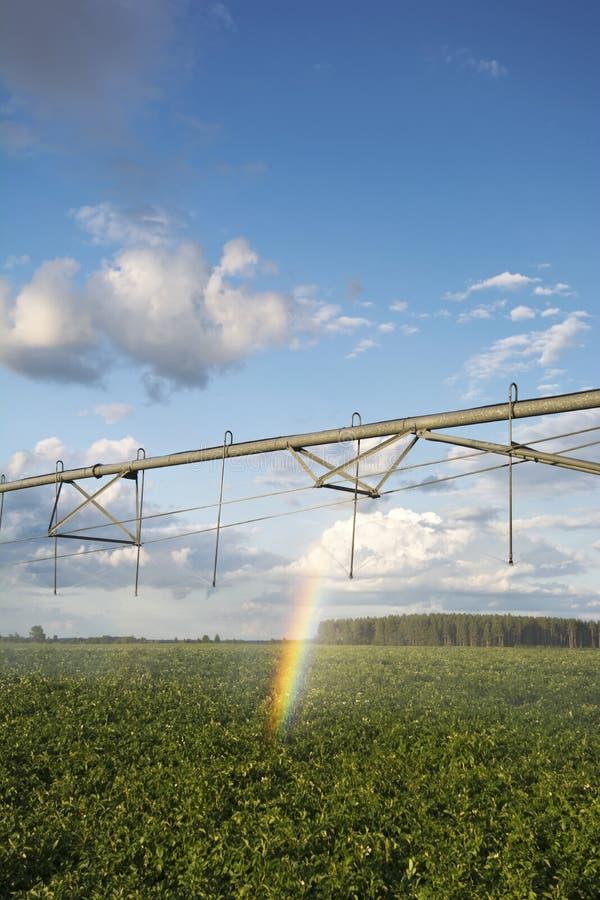 Irrigator, giacimento della patata con un arcobaleno. Midwest, U.S.A. immagini stock libere da diritti