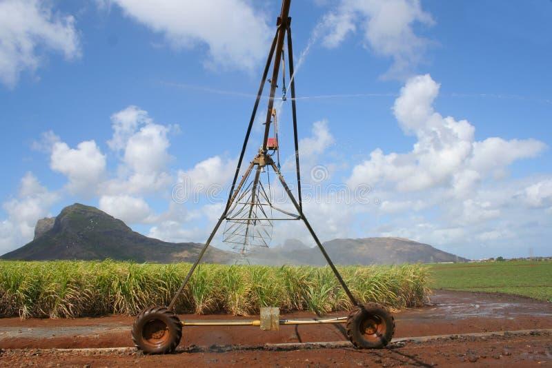 Download Irrigazione #1 fotografia stock. Immagine di canna, agricoltura - 214002