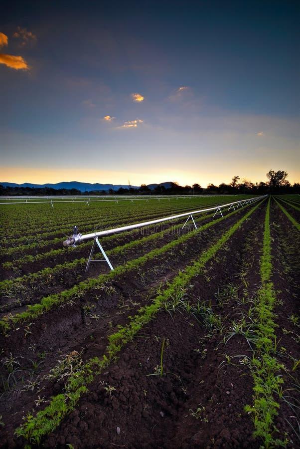Irrigazione agricola fotografia stock