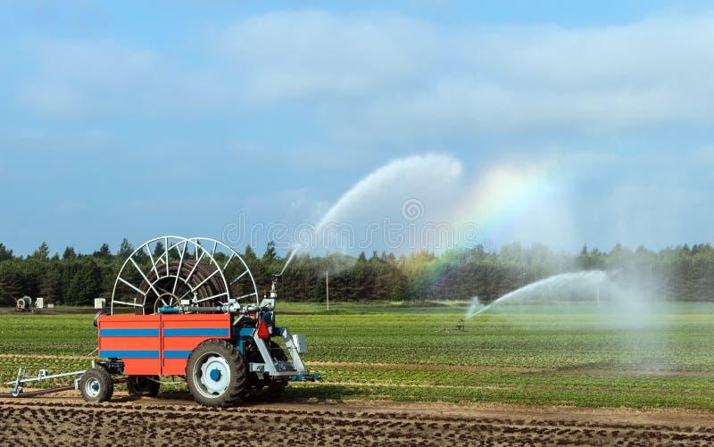 Irrigazione agricola del raccolto in tempo della siccità Innaffiatura di verdure immagini stock libere da diritti