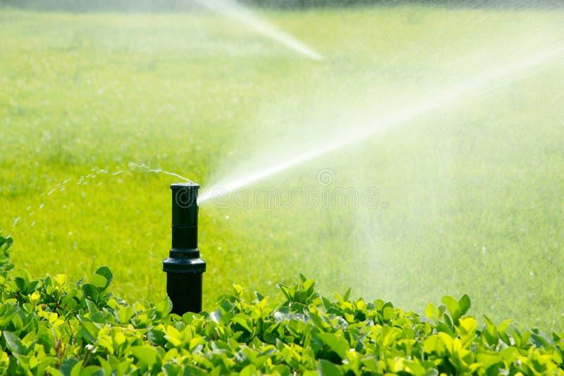 Irrigazione del giardino fotografia stock