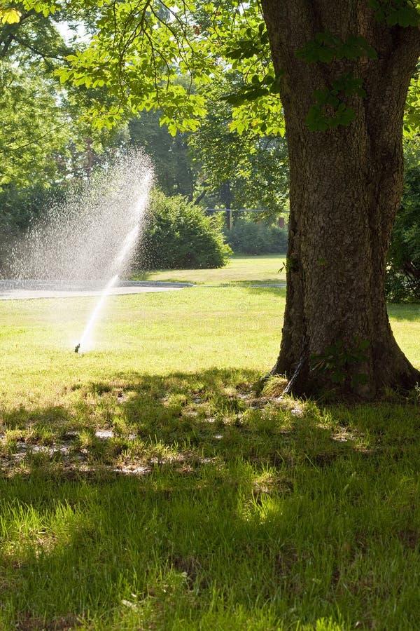 Irrigazione del prato inglese immagini stock libere da diritti