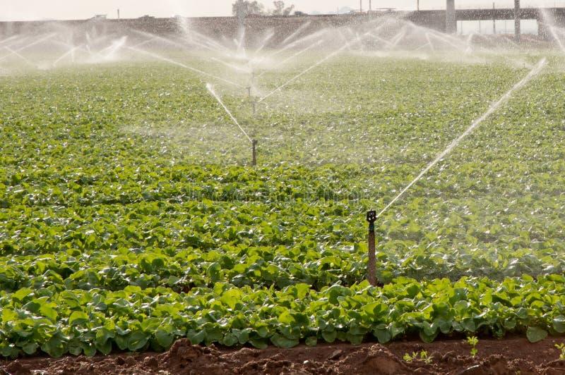 Irrigazione a pioggia immagine stock immagine di acqua for Timer per innaffiare