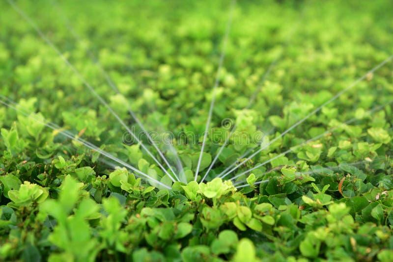 Irrigazione a pioggia immagine stock libera da diritti