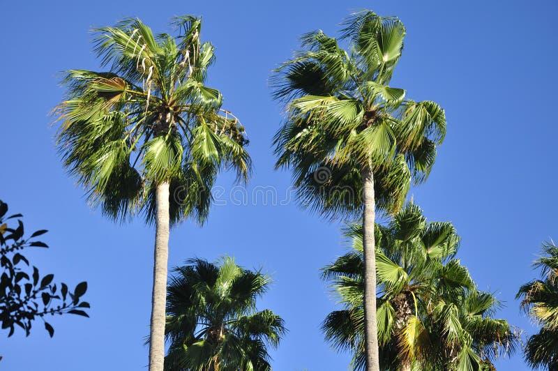 Irvine California Palm Trees fotos de archivo libres de regalías