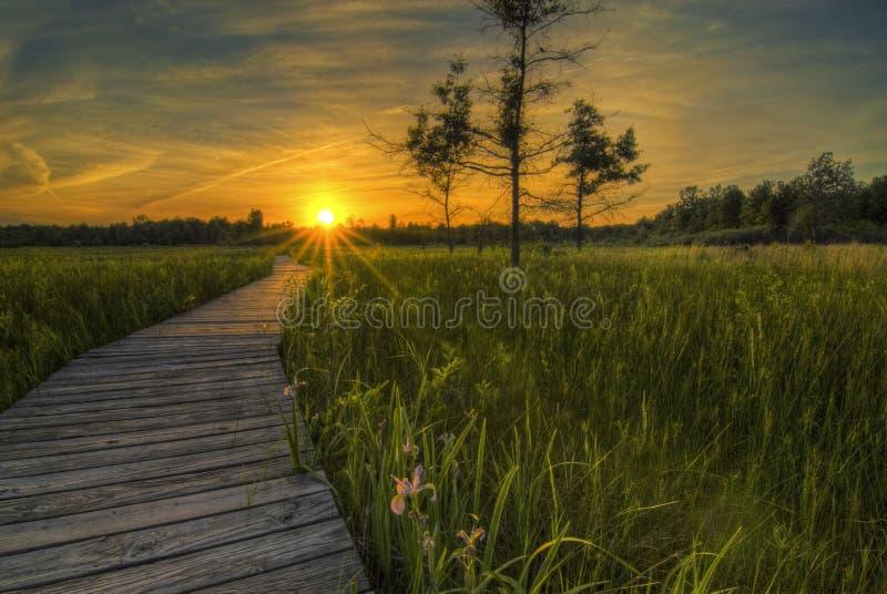 Irwin Grasland-Sonnenuntergang lizenzfreie stockfotos