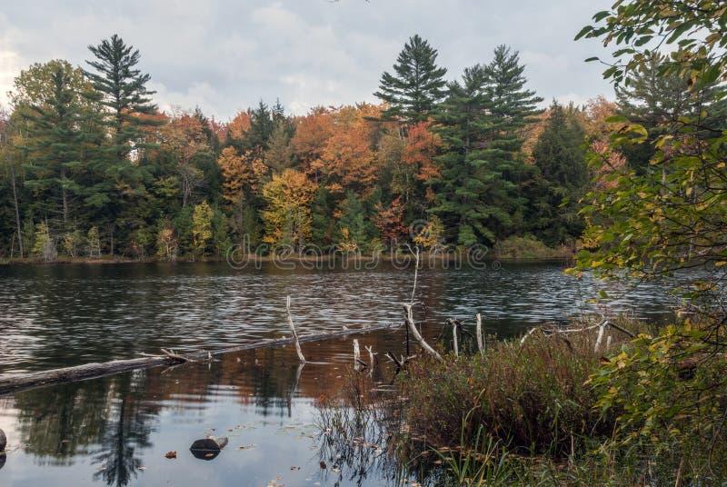 Irwin jezioro, Hiawatha las państwowy, Michigan, usa zdjęcie royalty free