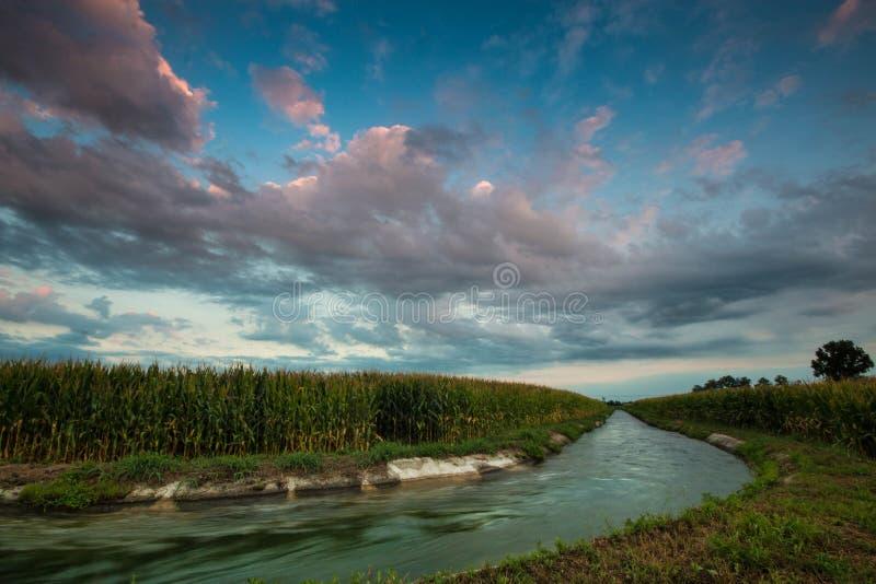 Irygacyjny kanał przez kukurydzanych poly, północny Włochy obrazy stock