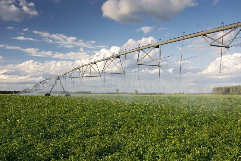 Irygator nad kartoflanym polem, Środkowy Zachód, usa zdjęcia stock