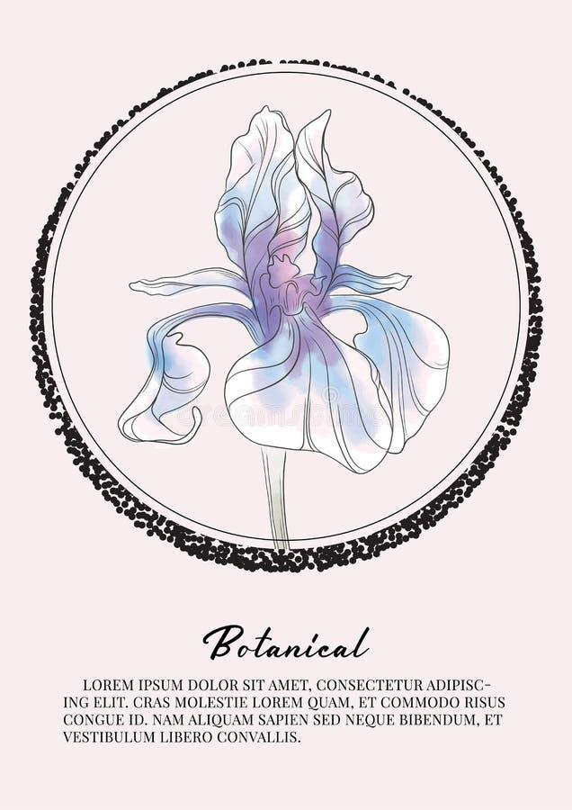 Irysowa kwiat akwareli dekoracja Botaniki wiosny lata sztuka Kwiecisty projekt dla kosmetyków, pachnidło, piękno opieki produkty  ilustracja wektor