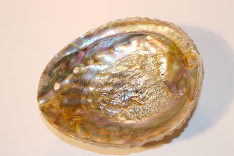 Iryzuje Abalone Shell zdjęcia stock