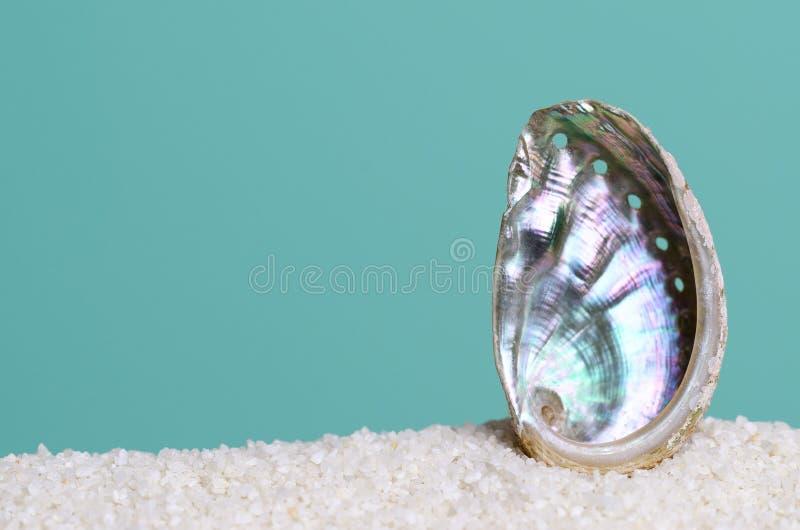 Iryzuje abalone skorupę na białym piasku na turkusowym tle zdjęcie stock