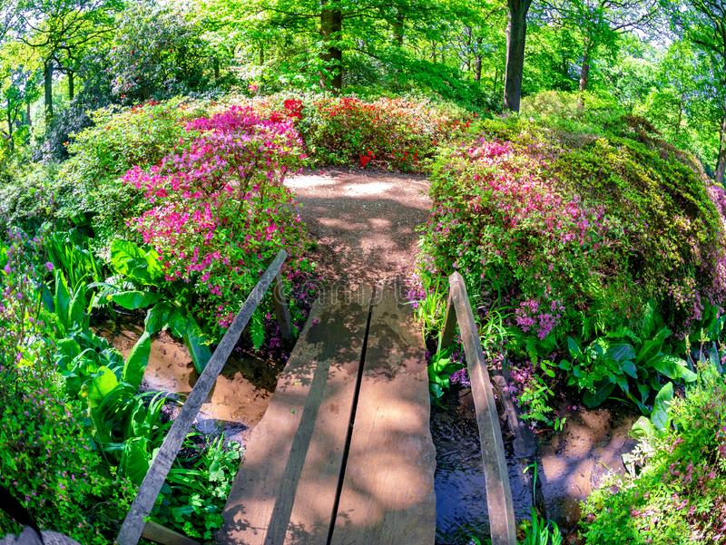 Isabella plantation area in summertime in London royalty free stock image