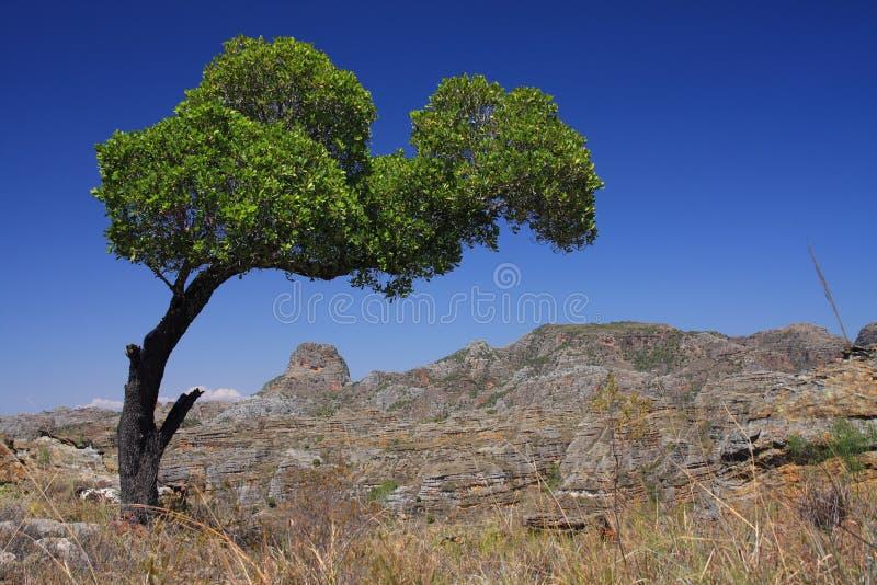 Isalo National Park royalty free stock image