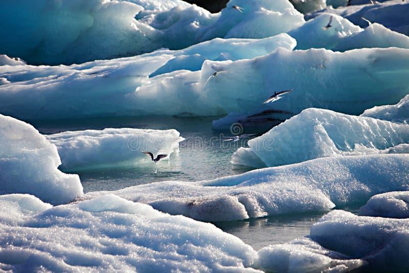 Isberglagun, Jokulsarlon sjö, Island royaltyfria foton