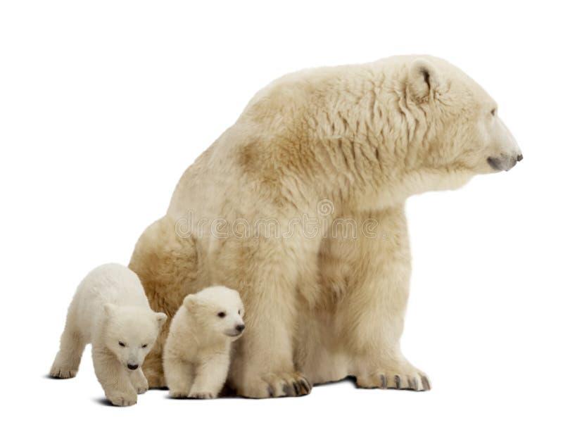 Isbjörn med gröngölingar. Isolerat över vit royaltyfria bilder