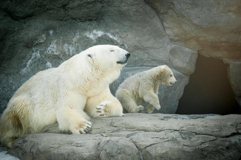 Isbjörnkvinnlign med hennes litet behandla som ett barn arkivbild