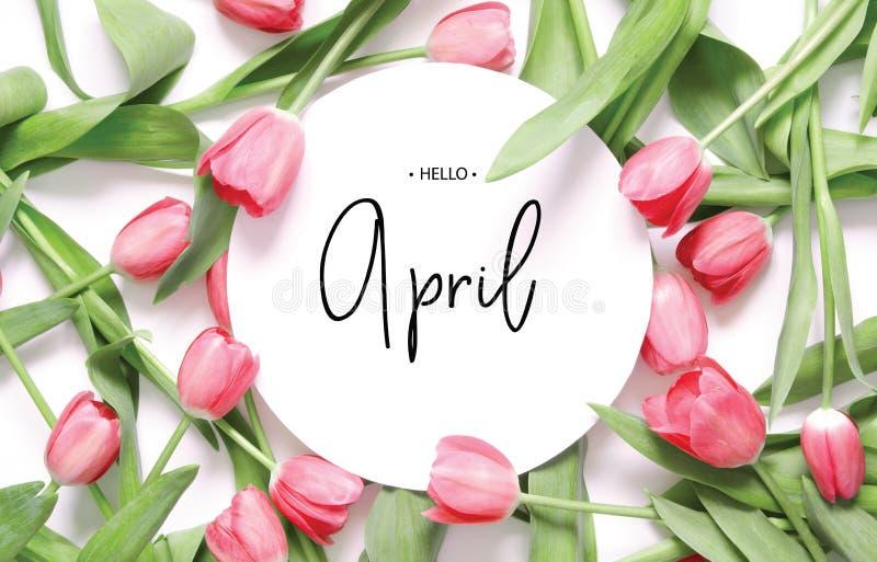 Iscrizione ciao aprile Fiore del tulipano fotografia stock libera da diritti