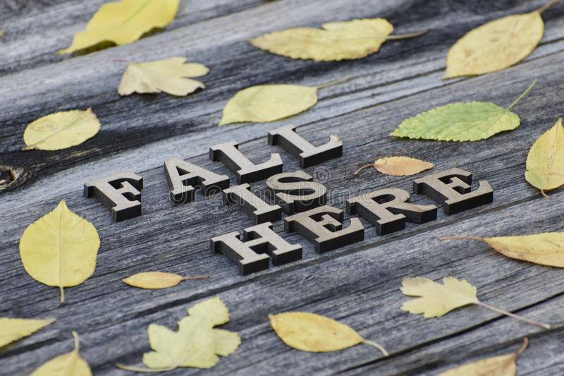 iscrizione La caduta è qui nelle lettere di legno Pagina della prateria gialla immagine stock