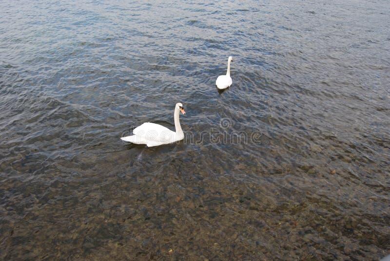 Iseo Lake royalty free stock photo