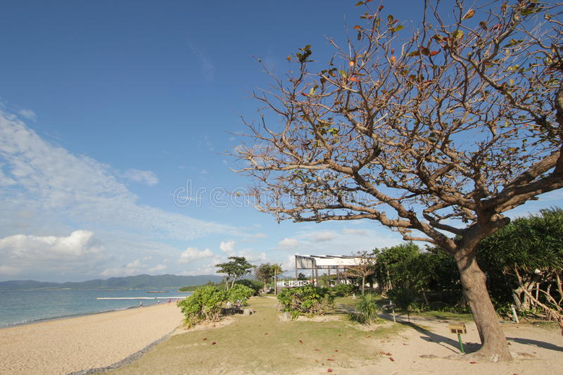 Sky, tree, sea, coast, shore, plant, cloud, beach, branch, spring, tourism, bay, ocean, vacation, tropics royalty free stock photo
