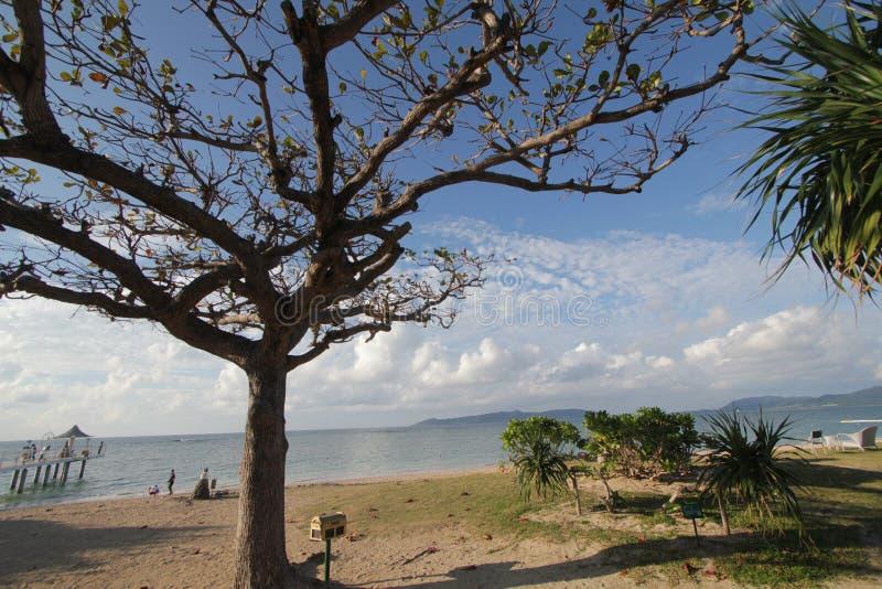 Tree, sky, plant, arecales, palm, beach, tropics, cloud, landscape, branch, tourism, sea, vacation, water, savanna, coast royalty free stock image