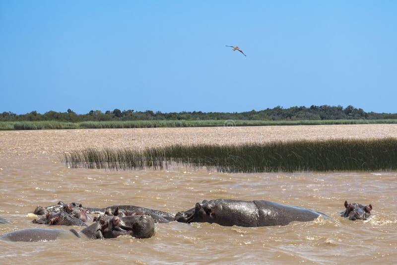 Isimangaliso-Sumpfgebietpark Südafrika lizenzfreies stockfoto