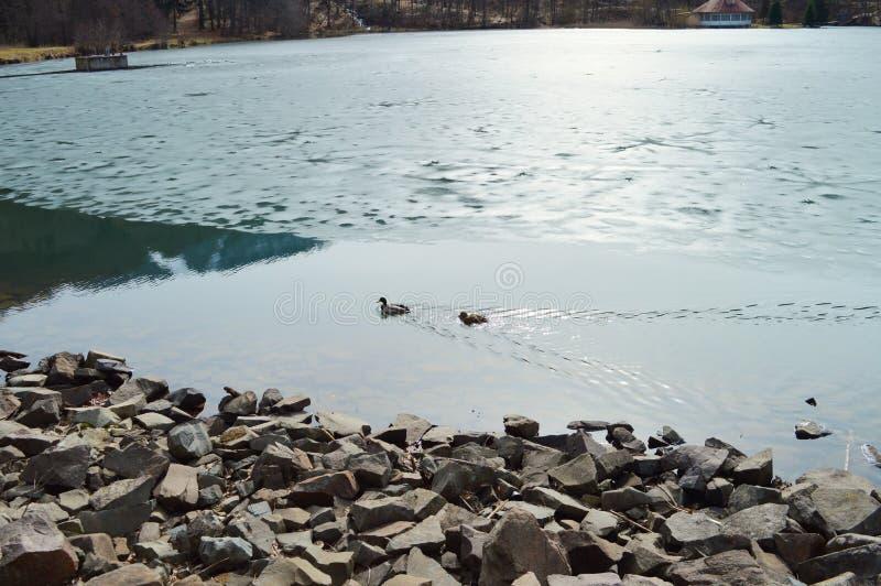 Iskall sjö i nord av Rumänien royaltyfri foto