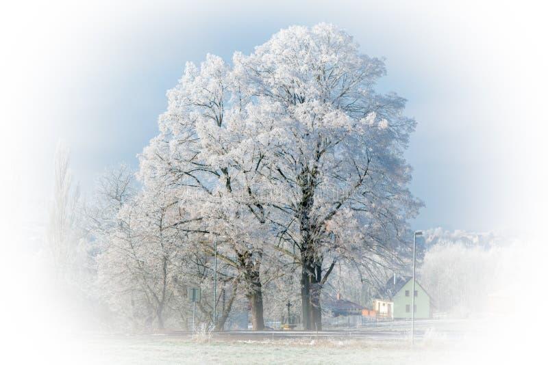 Iskall trädliten-blad lind arkivbilder