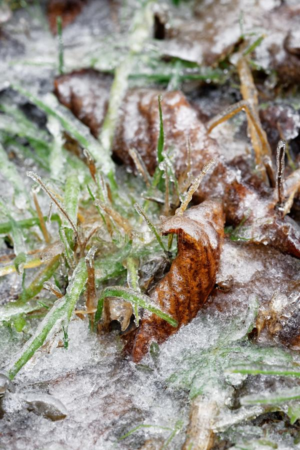 Iskalla sidor och grässtrån arkivbilder
