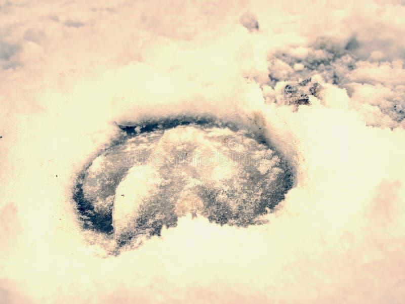 Iskallt hästfotspår i snö, detaljerat stycke fotografering för bildbyråer