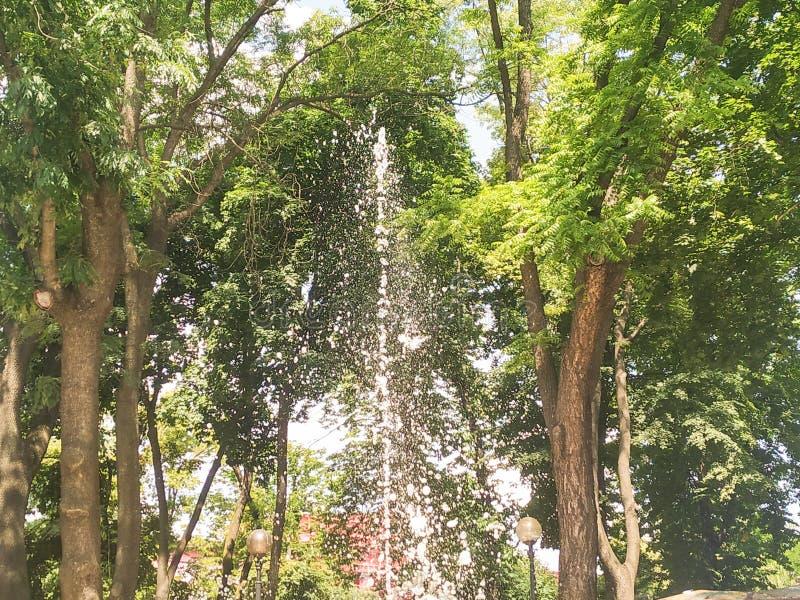 Iskrzasta fontanna między drzewami zdjęcia royalty free