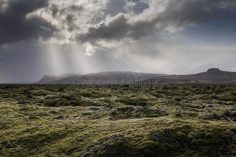 Islândia, musgo cobriu rochas imagens de stock royalty free