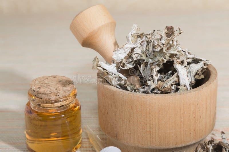 Isländisch Cetraria, heilend gesunde getrocknete Moos in einem Holzmörtel, Pipette und Glas mit Tinktur des Medikaments Alternati lizenzfreie stockfotos