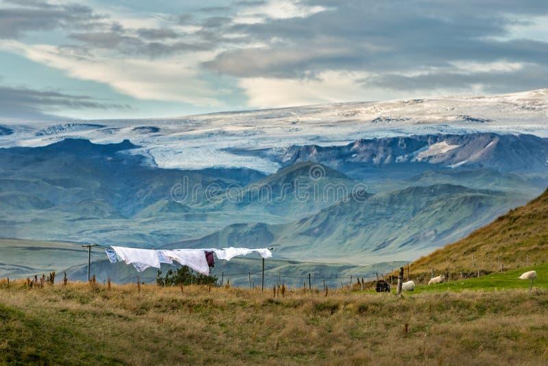 Isländische Frische stockbild
