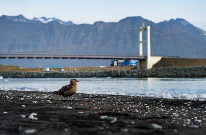 Isländische Landschaft, Brücke über Gletscherkanal stockfotografie