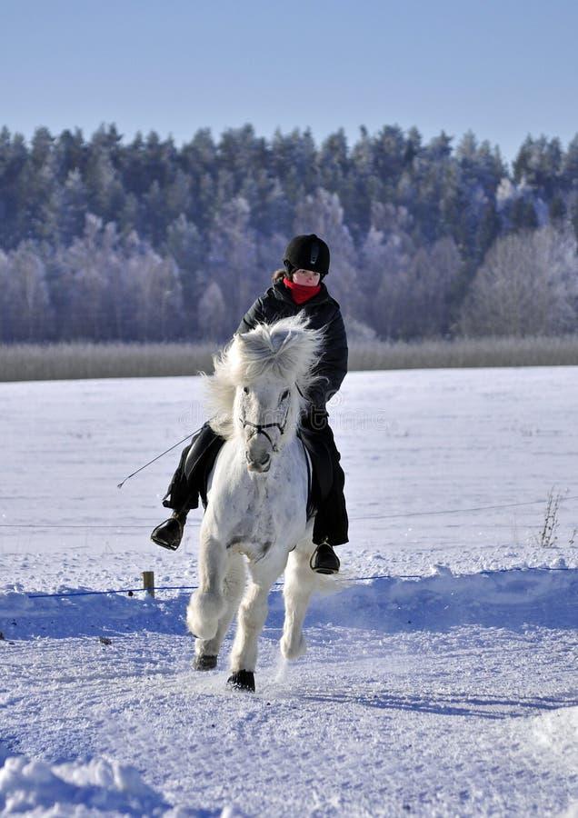 Isländische Pferdenkonkurrenz stockbilder