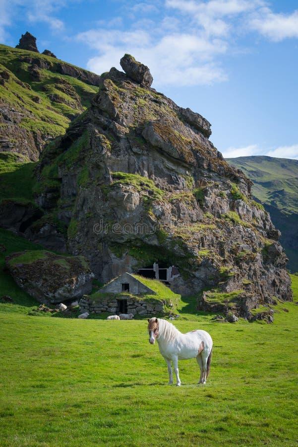 Isländisches Pferd nahe einer historischen Höhlenwohnung lizenzfreies stockbild