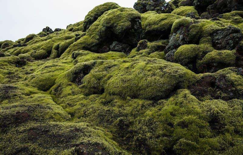 Isländska Lava Field Landscape med vulkaniskt vaggar dolt vid frodig grön mossa arkivfoto
